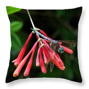Dragonfly On Honeysuckle Throw Pillow