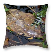 Dragonfly On Leaf In Creek Throw Pillow by Ben Upham III