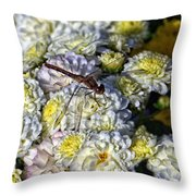 Dragonfly On White Mums Throw Pillow
