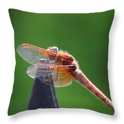 Dragonfly Red Throw Pillow