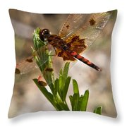 Dragonfly Resting 2 Throw Pillow