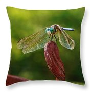 Dragonfly Resting II Throw Pillow