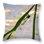Dragonfly Resting Upside Down Throw Pillow