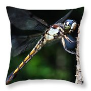Dragonfly Revisited Throw Pillow