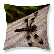 Dragonfly Spots Throw Pillow