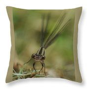 Dragonfly Up Close Throw Pillow