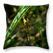 Dragonfly Venation Revealed Throw Pillow