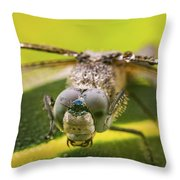 Dragonfly Wiping Its Eyes Throw Pillow