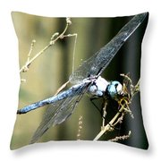 Dragonfly With Yellowjacket 1 Throw Pillow