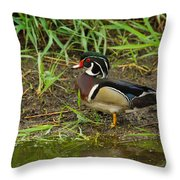Drake Wood Duck Throw Pillow
