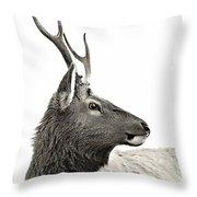 Dramatic Deer Throw Pillow