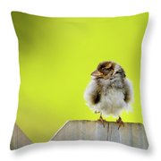 Dream Sparrow Throw Pillow