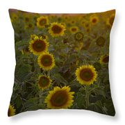 Dreaming In Sunflowers Throw Pillow