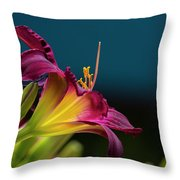 Dreaming In Technicolor Throw Pillow