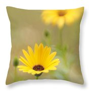Dreaming Of Lemon Symphony 2 Throw Pillow