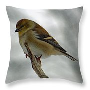 Dreaming Of Spring - American Goldfinch Throw Pillow