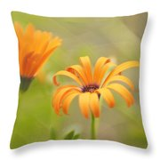 Dreams Of Orange Symphony In Spring 2 Throw Pillow