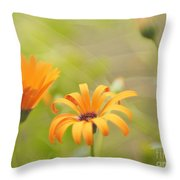 Dreams Of Orange Symphony In Spring  Throw Pillow