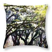 Dreamy Live Oaks Throw Pillow