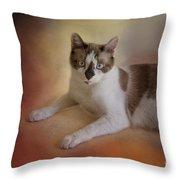 Dreamy Snowshoe Cat Throw Pillow