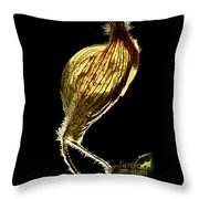 Dried Flowers With  The Slender Legs. Throw Pillow