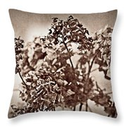 Dried Hydrangeas Throw Pillow