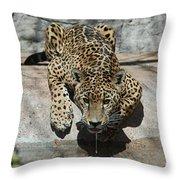 Drinking Jaguar Throw Pillow