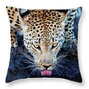 Drinking Leopard Throw Pillow