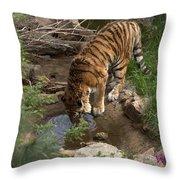 Drinking Tiger Throw Pillow