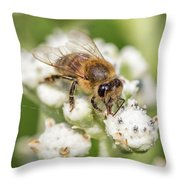 Drinking Up The Nectar, Apis Mellifera Throw Pillow