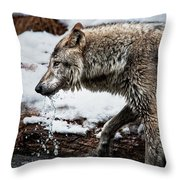 Drinking Wolf Throw Pillow