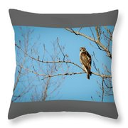 Drive By Hawk Throw Pillow