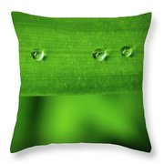 Droplets On Grass Throw Pillow