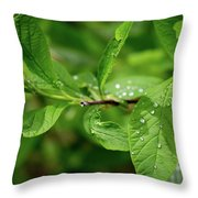 Droplets On Spring Leaves Throw Pillow