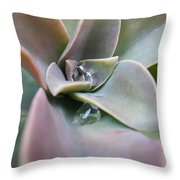 Droplets On Succulent Throw Pillow
