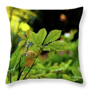 Drops On Plants After Morning Rain Throw Pillow