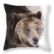 Drowsy Bear Throw Pillow