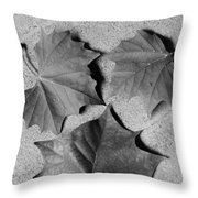 Dry Beauty Throw Pillow