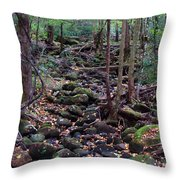 Dry River Bed- Autumn Throw Pillow