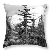 Dry Spruce Throw Pillow