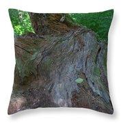 Dsc_0033 Web Throw Pillow