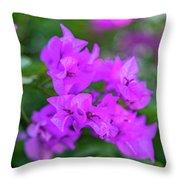 Dsc_1514 Web Throw Pillow
