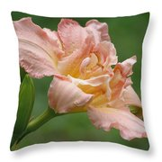 Dublin Elaine - Daylily Throw Pillow