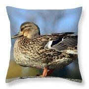 Duck 2 Throw Pillow