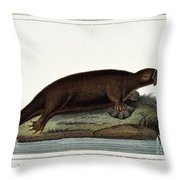 Duck-billed Platypus Ornithorhynchus Throw Pillow