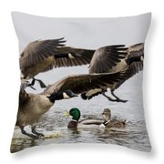 Duck Ducks Throw Pillow