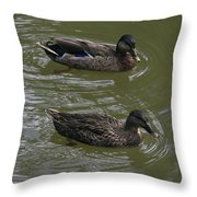 Duck Pair Swimming Throw Pillow