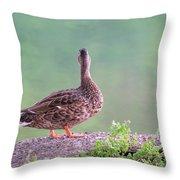 Duck Ponders Throw Pillow