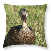 Duck Stare Throw Pillow