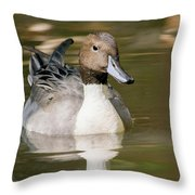Duck Swimming, Front Portrait. Throw Pillow